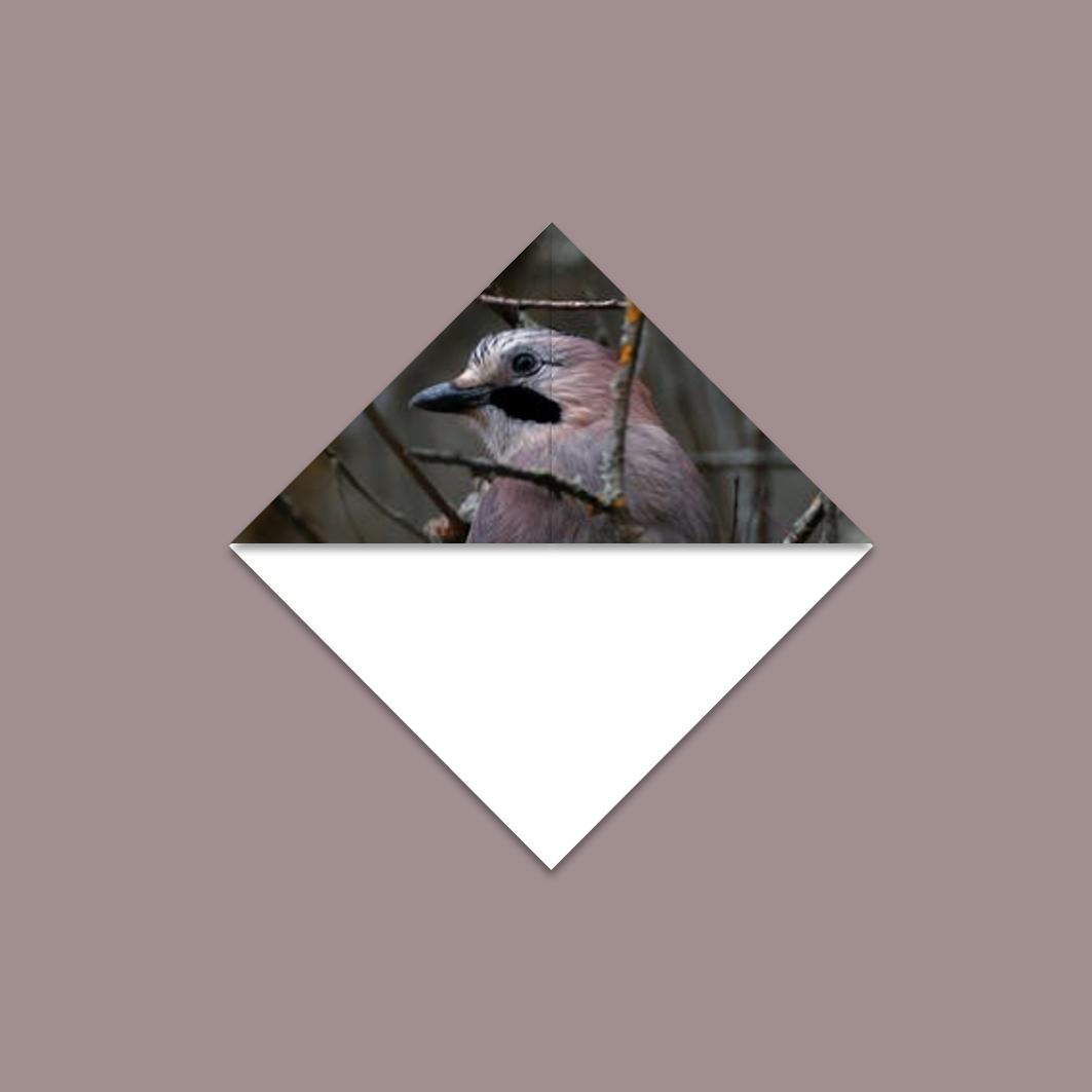 Driehoekboekenlegger Besha