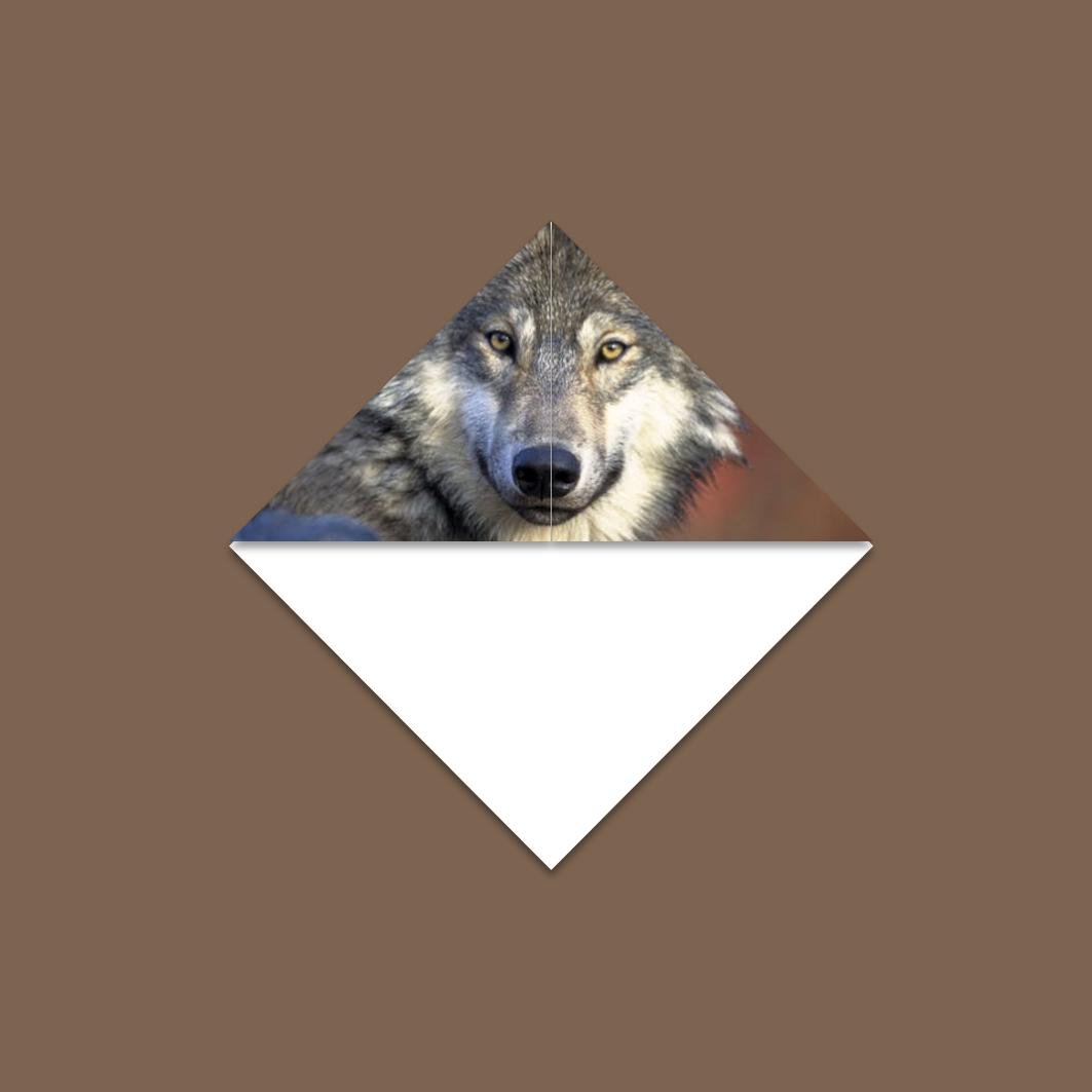 Driehoekboekenlegger Druntelaar